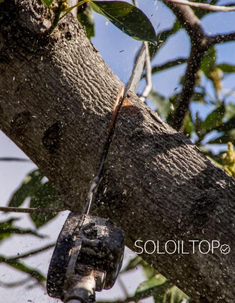 motosega telescopica taglia albero